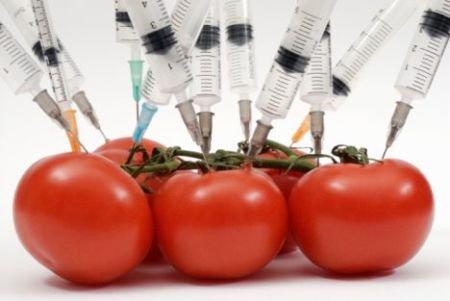 POMODORO OGM